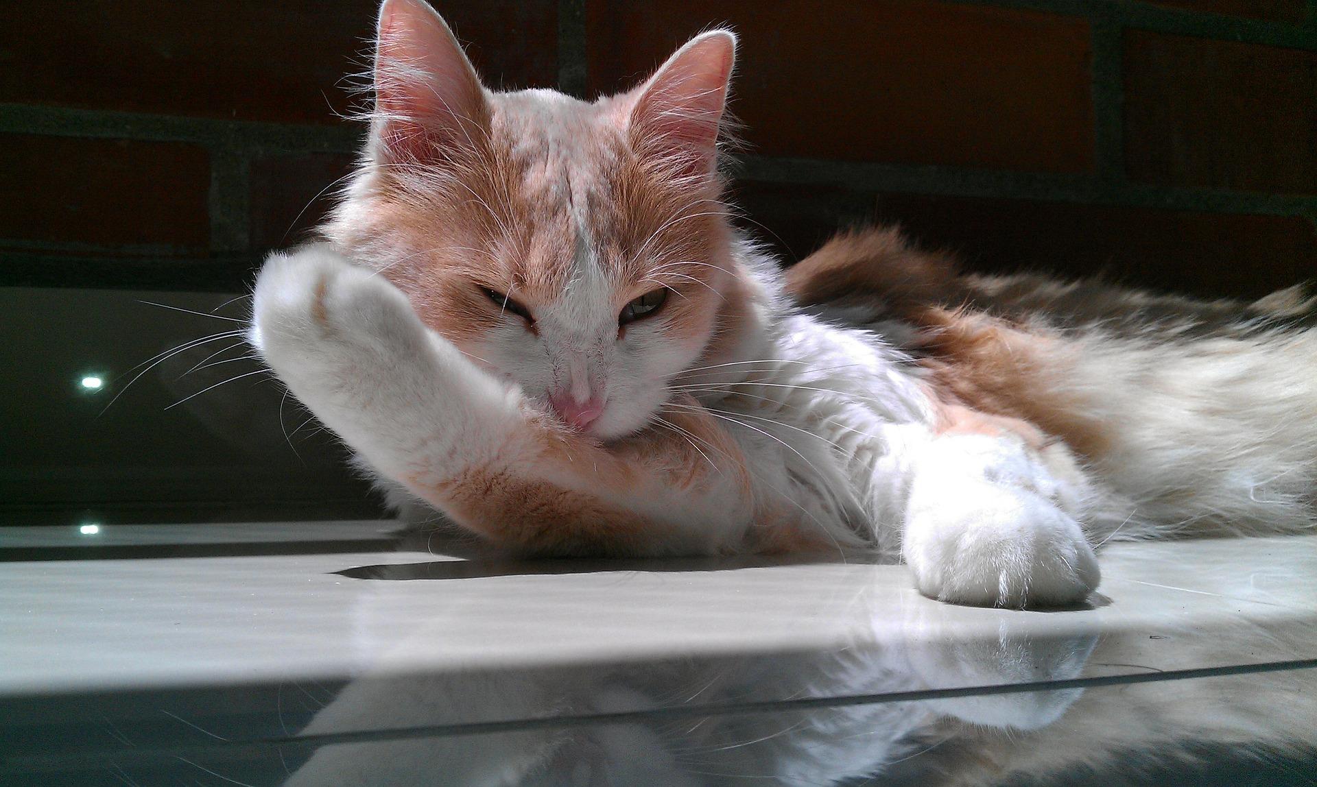 gato_3